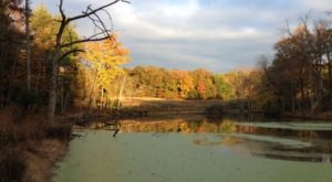 Explore 7 Miles Of Diverse Trails At The Central Kentucky Wildlife Refuge