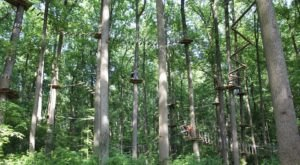Try A Ropes Course, Ride A Zip Line, Enjoy Nature, And More All At TreeRunner Adventure Park Near Detroit