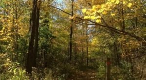 Surround Yourself With Fall Foliage On The Osage Orange Tunnel Trail, An Easy 1-Mile Hike In Ohio