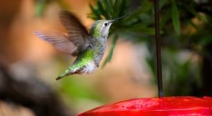 Thousands Of Hummingbirds Are Headed Straight For Colorado This Fall