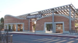Explore Phoenix Zoo After Hours At The Adults-Only Roars & Pours Event In Arizona