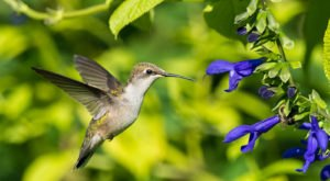 Thousands Of Hummingbirds Are Headed Straight For Texas This Fall