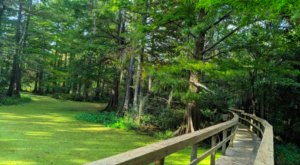 Explore Over 400 Acres Of Swamps and Marshes At The Northlake Nature Center Near New Orleans