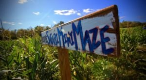 Your Family Will Love The Biggest And Hardest Corn Maze Near Nashville At Fiddle Dee Farms