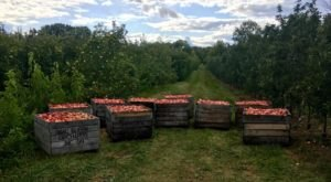 Pick Your Own Apples At MacQueen's Apple Barn And Cider Mill In Ohio