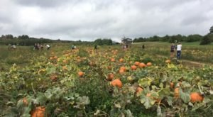 You Could Spend Hours In The 35-Acre Pumpkin Patch At Mack's Apples In New Hampshire