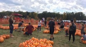 Nothing Says Fall Is Here More Than A Visit To Red Wagon Farm Near Cleveland