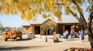 You Could Spend Hours In The 90-Acre Pumpkin Patch At Bishop's Farm In Northern California