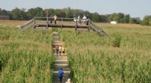 Get Lost In An Award Winning Ohio Corn Maze That's Also A Puzzle At Tom's Maze And Pumpkin Farm This Season