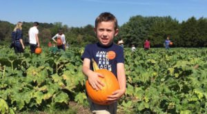 You Could Spend Hours In The Giant Pumpkin Patch At Carrigan Farms In North Carolina