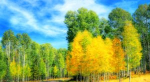 Here's When Fall Foliage Will Peak This Year In Arizona And The Best Places To See It
