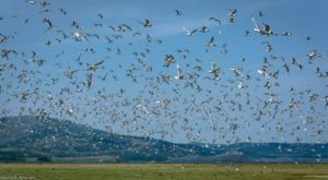 Spot Hundreds Of Sandhill Cranes In Idaho This Fall At Grays Lake National Wildlife Refuge