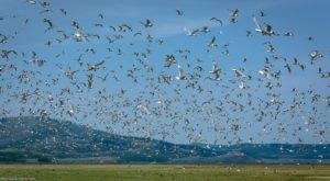 Spot Hundreds Of Sandhill Cranes In Idaho This Fall At Grays Lake National Wildlife Refuge