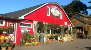 Try The Piping Hot Donuts And Cider From Soergel Orchards Near Pittsburgh