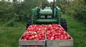 Pick Your Fill Of Apples At Hoversten Orchard In South Dakota