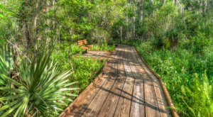 You'll Love The Endless Maze Of Boardwalk Trails At Barataria Preserve In Louisiana