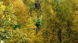 Zipline Through A Canopy Of Colorful Changing Leaves At Empower Adventure Center In Connecticut