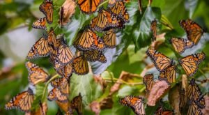 Wendy Park In Cleveland Becomes A Butterfly Forest Each Fall