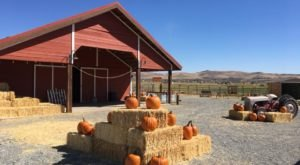 You Could Spend Hours In The Pumpkin Patch At The 100-Acre Andelin Farm In Nevada
