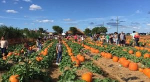 Choose From Over 80-Acres Of Pumpkins At The Charming Bedner's Farm Fresh Market In Florida
