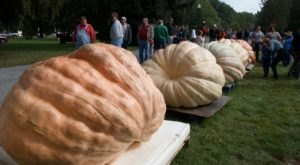 The 1,000-Pound Pumpkins At The Saratoga Giant Pumpkinfest In New York Will Make You Stop And Look Twice