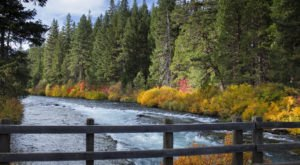 Surround Yourself In A Blaze Of Fall Foliage On The West Metolius River Trail In Oregon