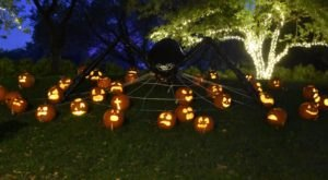 For A Halloween Adventure In Kansas, Take Botanica's Spooky Jack-O-Lantern Walk