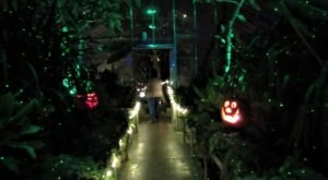 Follow The Glowing Pumpkin Path At The Fall Flicker Event At Kingwood Center Gardens In Ohio