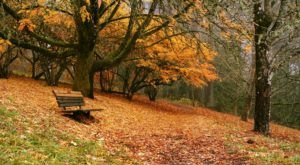Fall Is Here And Hoyt Arboretum Is A Beautiful Place To See The Changing Leaves In Oregon