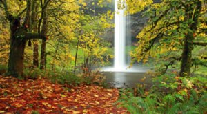 The Most Beautiful Fall Foliage Hands-Down Is At Oregon's Silver Falls State Park