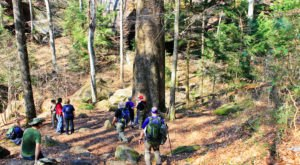 People Travel From All Over The US To Hike At Sipsey Wilderness, Alabama's Largest Wilderness Area