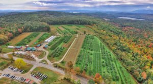 Take A Trip To These 9 Charming Orchards In Maine This Season