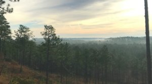 The Treetop Views From The Backbone Trail In Louisiana Are Absolutely Mesmerizing