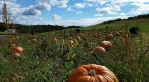 You Could Spend Hours In The 10-Acre Pumpkin Patch At Shenot Farm Near Pittsburgh