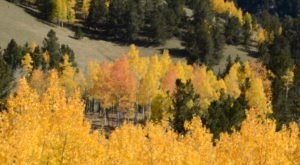 The Fall Foliage In Colorado Should Be Even More Beautiful This Year… Here Is Why