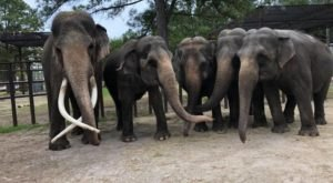 Spend An Afternoon At Two Tails Ranch Elephant Sanctuary In Florida