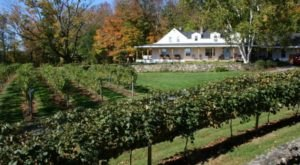 Sip Wine With Alpacas At Gilmanton Winery & Vineyard In New Hampshire