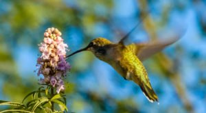 Thousands Of Hummingbirds Are Headed Straight For Arizona This Fall