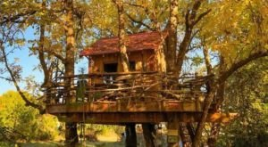 Experience The Fall Colors Like Never Before With A Stay At The Treehouse Retreat In Oregon