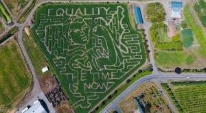 Get Lost In Bella Organic Farm's 7-Acre Corn Maze In Oregon This Autumn