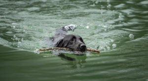 The Toxic Blue-Green Algae Responsible For Killing Dogs Around The U.S. Has Been Found In South Carolina