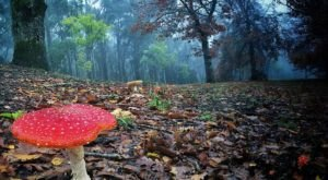 You Will Want To Keep Your Eye Out For These Rare Poisonous Mushrooms In Colorado