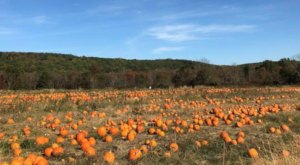 The Massive Pumpkin Patch At Ort Farms Is A Picturesque Fall Destination In New Jersey