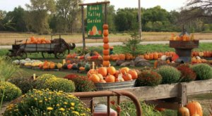 Go Pumpkin Picking On A Gorgeous Fall Day At Hawk Valley Garden In Iowa