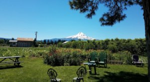 For A Fun Fall Weekend With The Family, Take A Trip To Draper Girls Country Farm In Oregon