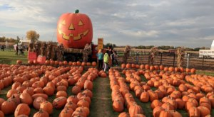 Nothing Says Fall Is Here More Than A Visit To Trabbic Pumpkin Farm Near Detroit