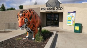 Meet Exotic Animals And Listen To Live Music At Red River Zoo's Wild Celebration In North Dakota