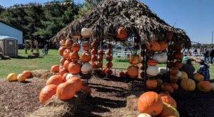You Could Spend Hours In The 20-Acre Pumpkin Patch At DeBuck's In Michigan
