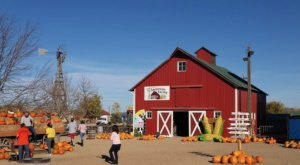 Choose From Over 70 Varieties Of Pumpkins At The Charming Anderson Farms In Colorado