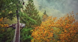See Fabulous Fall Colors On The Pumpkin Ridge Zip Tour In Oregon
